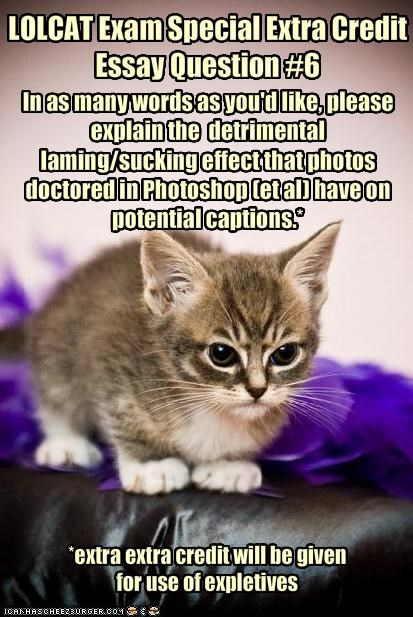 LOLCAT Exam Special Extra Credit Essay Question #6
