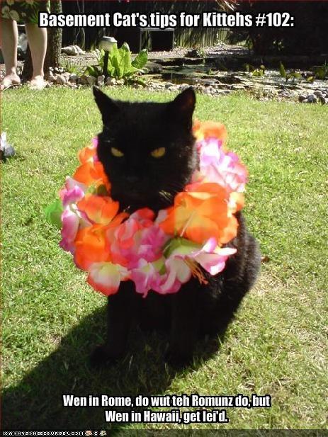 Basement Cat's tips for Kittehs #102: