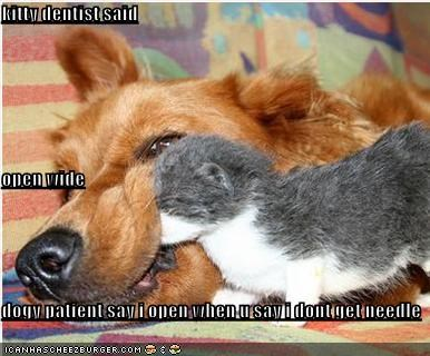 kitty dentist said  open wide dogy patient say i open when u say i dont get needle
