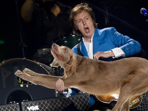 The Best Bass Players Playing Pooches