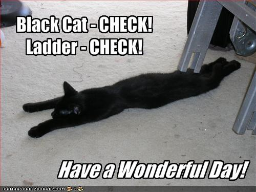 Black Cat - CHECK!