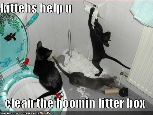 kittehs help u  clean the hoomin litter box