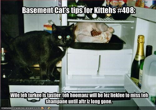 Basement Cat's tips for Kittehs #408: