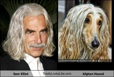 Sam Elliot TotallyLooksLike.com Afghan Hound