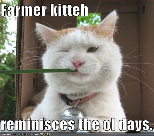 Farmer kitteh   reminisces the ol days.
