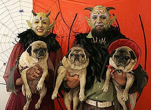 13 Pets and Their People Prepared for Halloween!