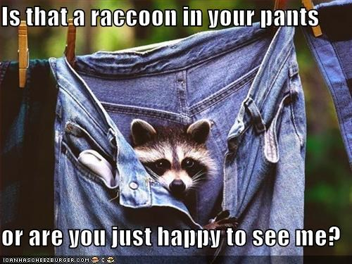 Is that a raccoon in your pants  or are you just happy to see me?