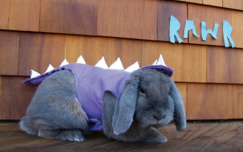 8 Pets Dressed as Dinosaurs
