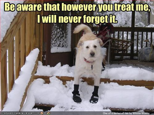The Ten Commandments for Dog Owners: #6