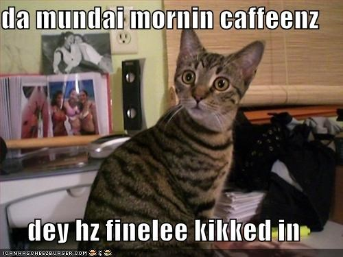 da mundai mornin caffeenz  dey hz finelee kikked in