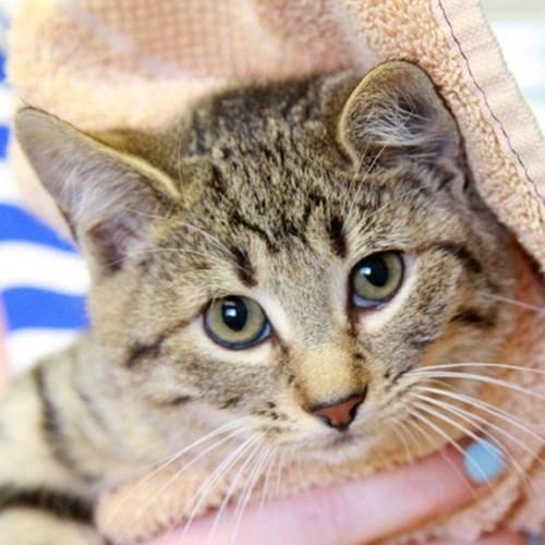 kitten,national cat day 2013,adoption