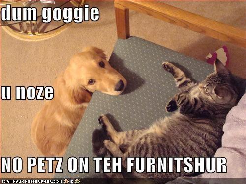 dum goggie u noze NO PETZ ON TEH FURNITSHUR