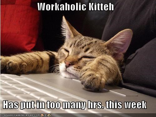Workaholic Kitteh  Has put in too many hrs. this week