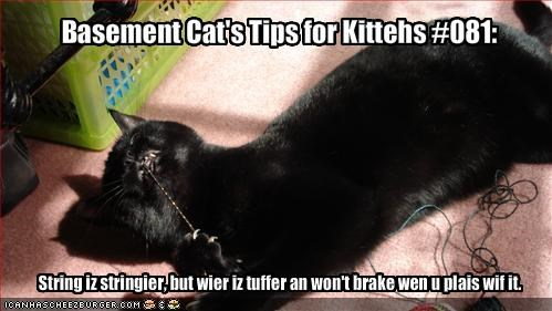 Basement Cat's Tips for Kittehs #081: