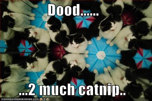 Dood......  ...2 much catnip..