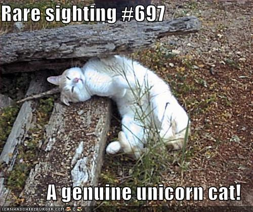 Rare sighting #697  A genuine unicorn cat!