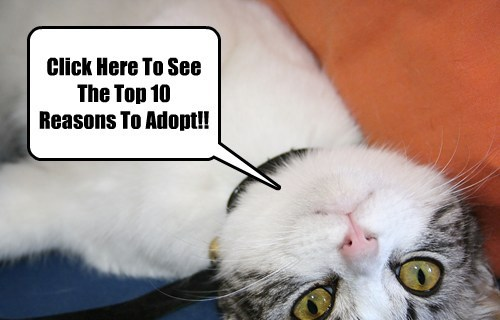 Top 10 Reasons To Adopt A Pet