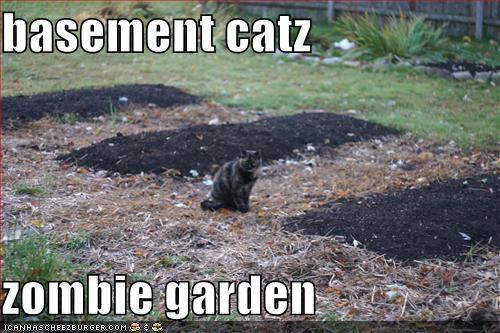 basement catz  zombie garden