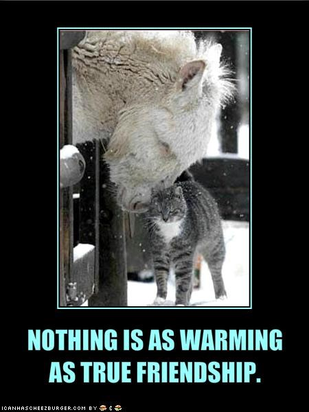NOTHING IS AS WARMING   AS TRUE FRIENDSHIP.