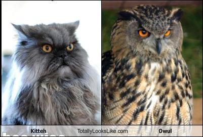 animals,Cats,Owl