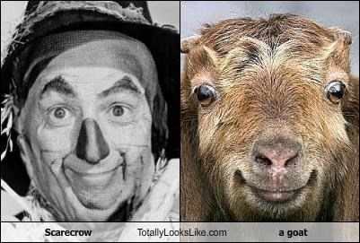 Scarecrow Totally Looks Like a goat