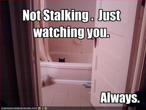 Not Stalking .  Just watching you.