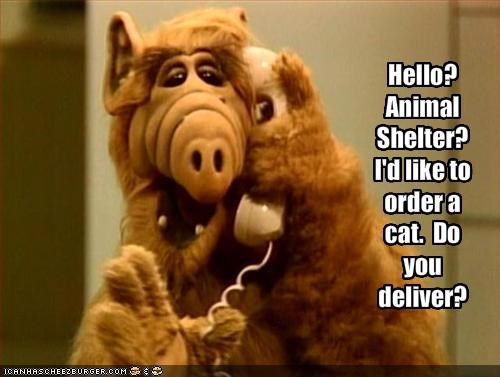 Hello?  Animal Shelter?  I'd like to order a cat.  Do you deliver?