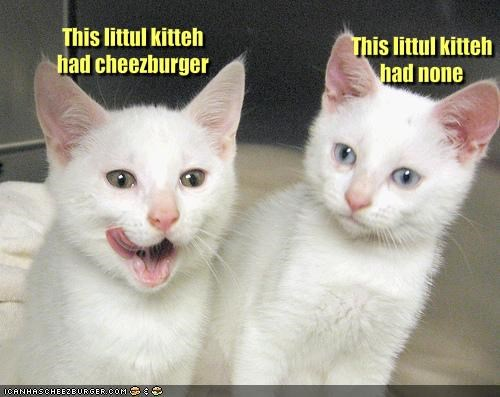 This littul kitteh