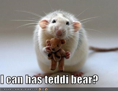I can has teddi bear?