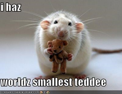 i haz  worldz smallest teddee
