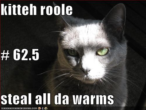 kitteh roole # 62.5 steal all da warms