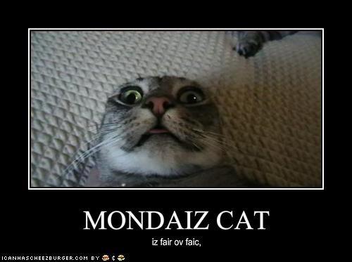 MONDAIZ CAT