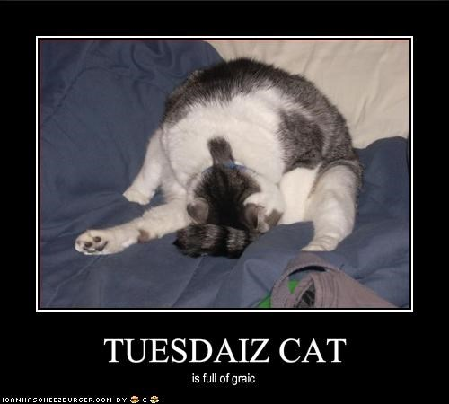 TUESDAIZ CAT