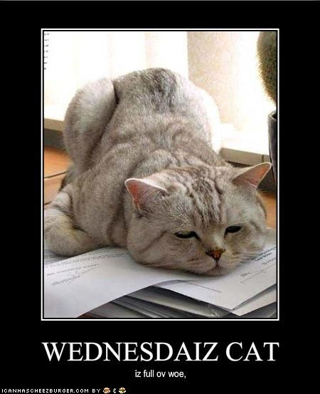 WEDNESDAIZ CAT