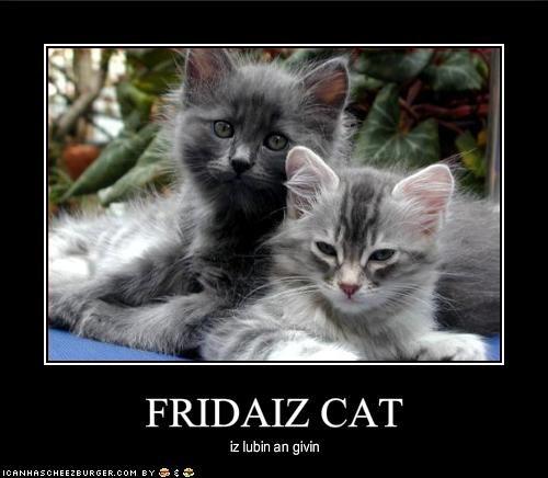 FRIDAIZ CAT