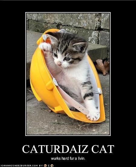 CATURDAIZ CAT