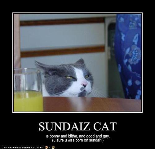 SUNDAIZ CAT