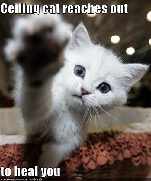 Ceiling cat reaches out  to heal you