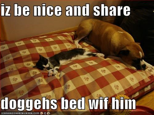 iz be nice and share  doggehs bed wif him