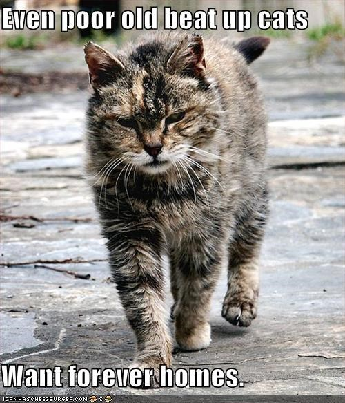 Even poor old beat up cats  Want forever homes.
