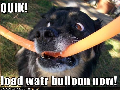 QUIK!    load watr bulloon now!