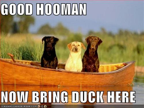 GOOD HOOMAN  NOW BRING DUCK HERE