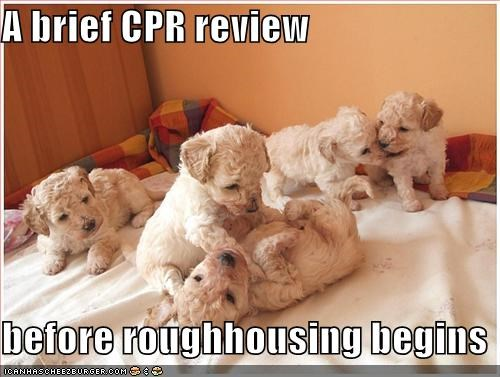 A brief CPR review  before roughhousing begins