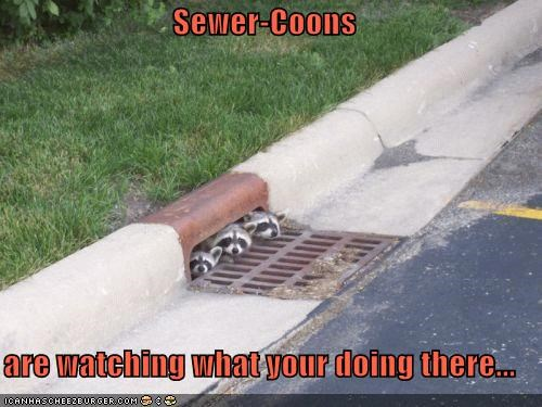 Sewer-Coons  are watching what your doing there...
