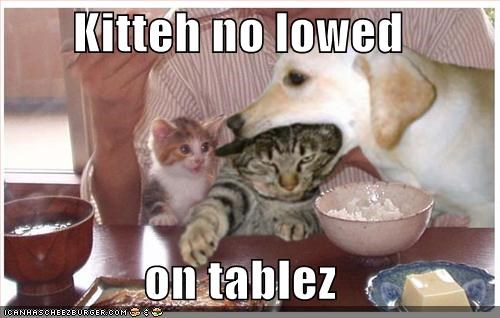Kitteh no lowed   on tablez