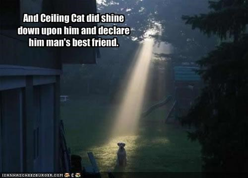 And Ceiling Cat did shine down upon him and declare him man's best friend.