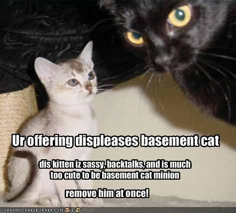 Ur offering displeases basement cat