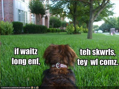 grass,lolsquirrels,long,outside,sneaky,tree,wait