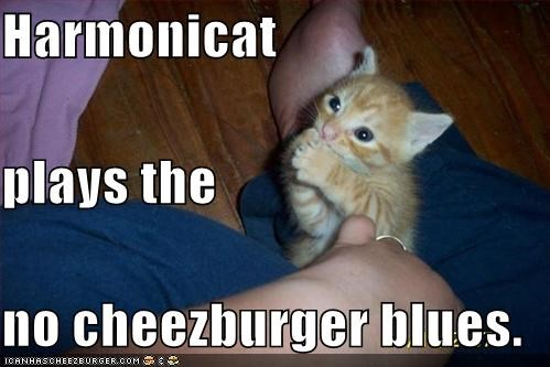 Harmonicat plays the no cheezburger blues.