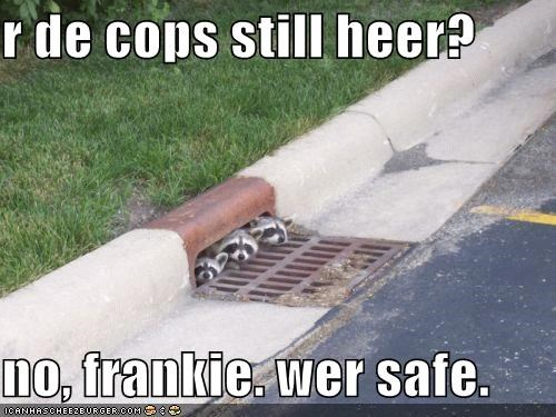 r de cops still heer?  no, frankie. wer safe.